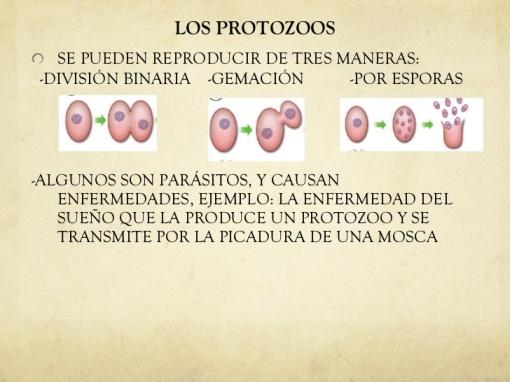 protozoos-2